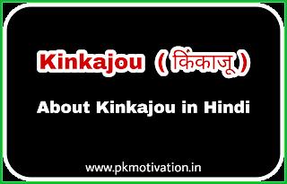 Kinkajou  ( किंकाजू )