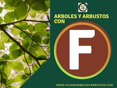 Arboles y arbusto con f. Listado de especies que empiezan con la letra f