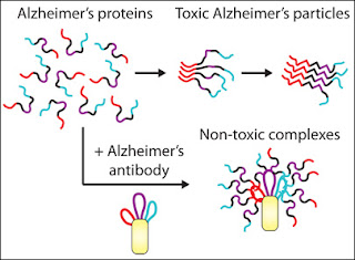 Antibodies for Combating Alzheimer's and Parkinson's Disease