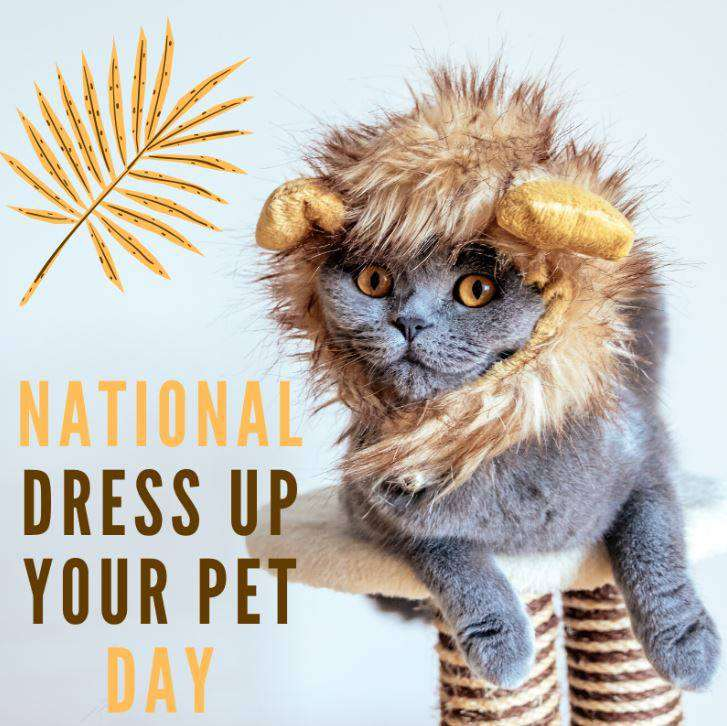 National Dress Up Your Pet Day Wishes
