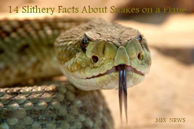 14Slithery Facts About Snakes on a Plane