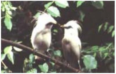 Hewan Langka di Indonesia