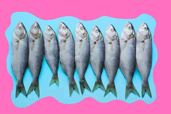 Add bluefish to your diet
