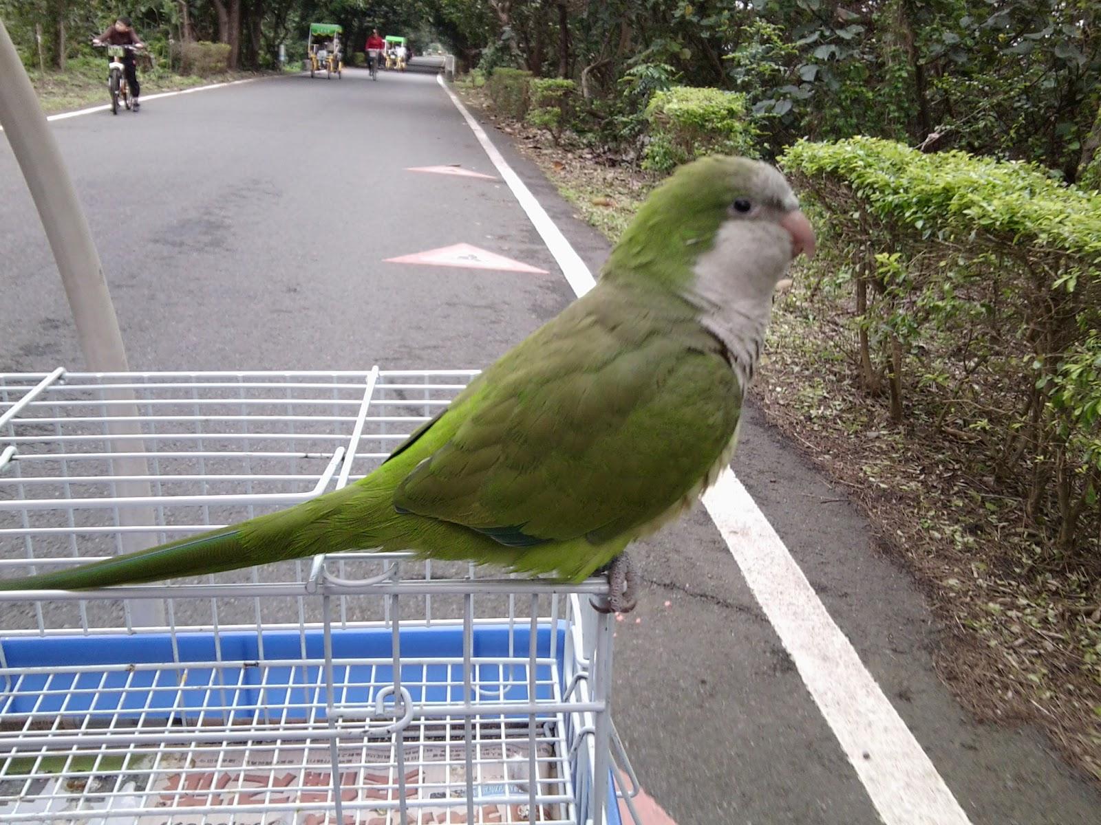 寵物與我: 和尚鸚鵡飼養須知。