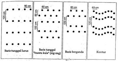 cara membuat lubang tanam dan jarak tanam