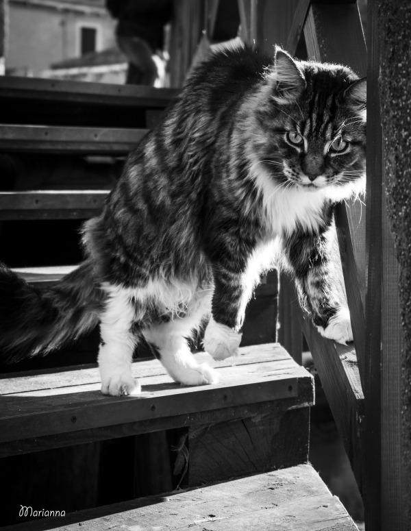 gatto venice