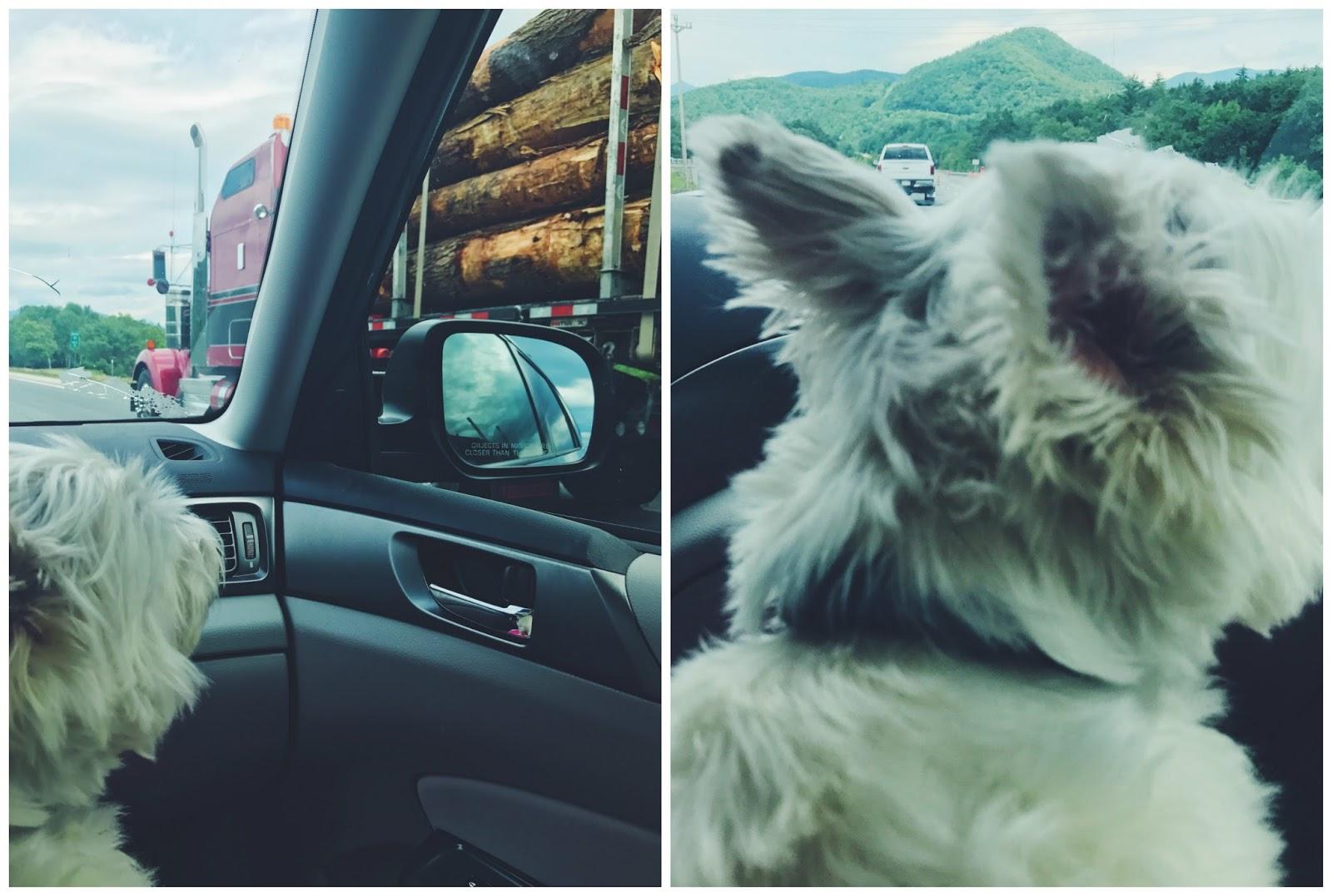 driving white mountains