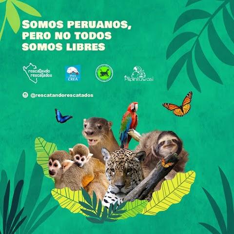 RESCATANDO RESCATADOS - Nos sumamos a defensores de los animales que trabajan para apoyar 3 centros de rescate en Iquitos