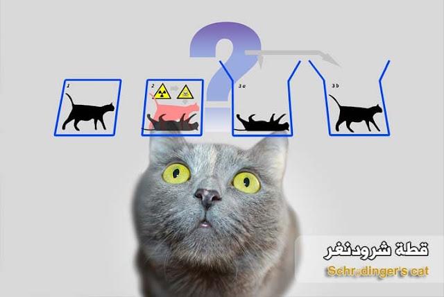 قطة شرودنغر