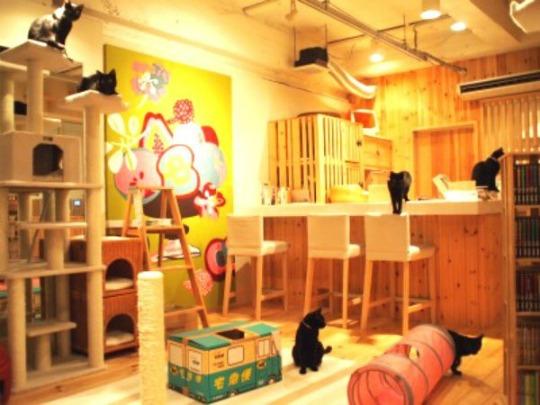 cat cafés in japan