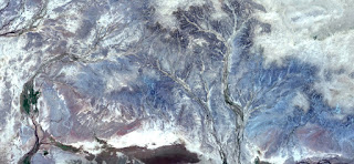 winter forest,Stone plant fantasy,Abstract Naturalism,abstract photography deserts of Africa from the air,abstract surrealism,mirage in desert,fantasy forms and colors in the desert,plants,flowers,