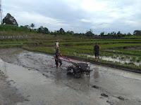 Berjibaku Dengan Lumpur, Babinsa Koramil 16/PT  Bantu Warga Bajak Sawah 6 Rante  Gunakan Traktor