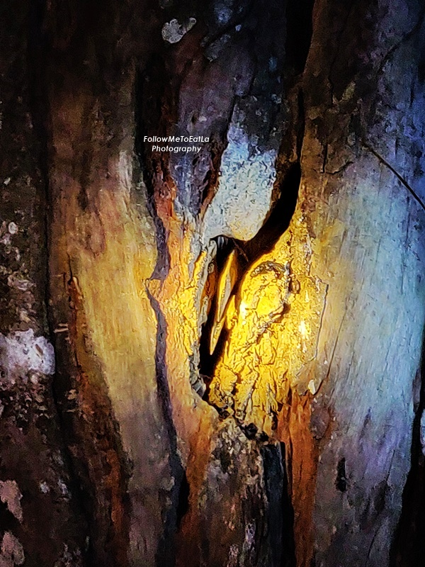 Myne Resort Bilit - Night Safari - Hornbills Nest