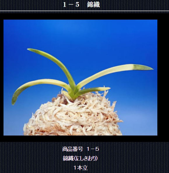 http://www.fuuran.jp/1-5html