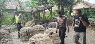 Arena Sabung Ayam Di Dusun Sukorejo Desa Grobogan Mojowarno Digerebek Polsek Mojowarno.