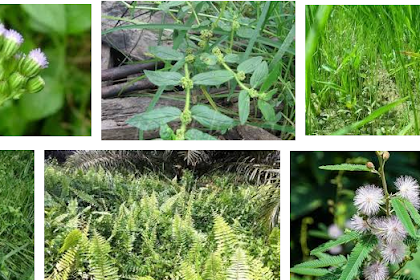 Jenis dan Klasifikasi Herbisida Terlengkap.