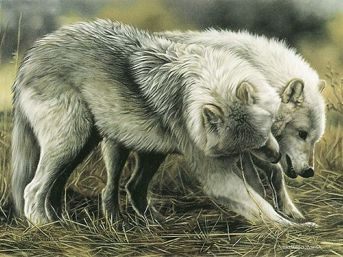 Lesley Harrison | American  Wildlife painter