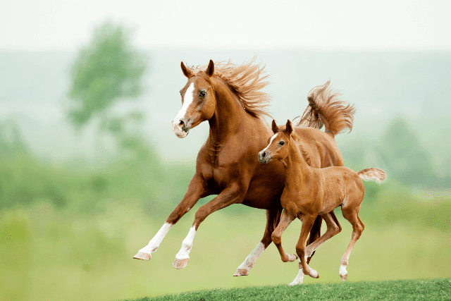 combien-pese-un-cheval