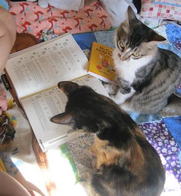 Cats' kanji.