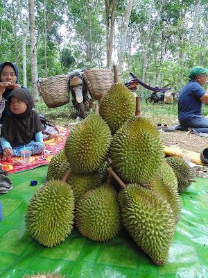 Kontes Durian Biih