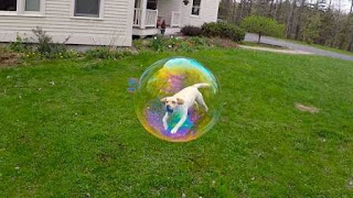 dog in a bubble