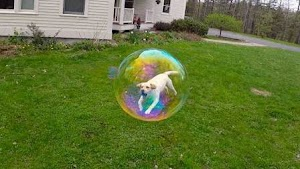 7 Photos Captured at the Perfect Time