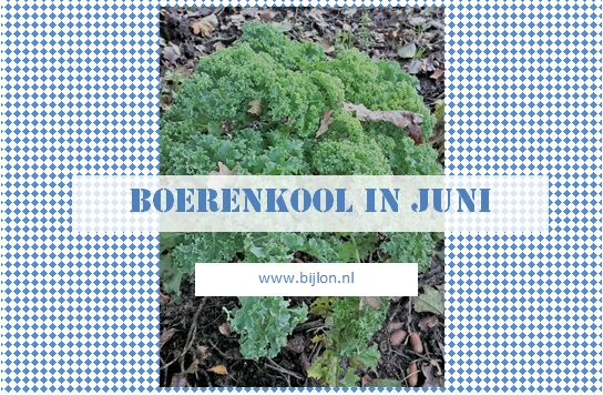 https://bijlon.blogspot.nl/2017/06/boerenkool-in-juni.html