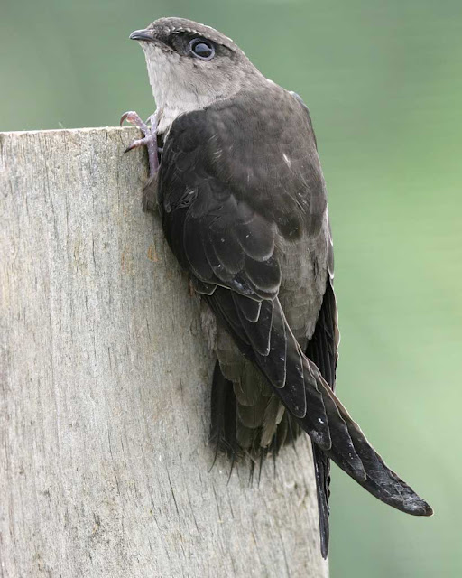 Μεγάλο πουλί μικροσκοπική τρύπα