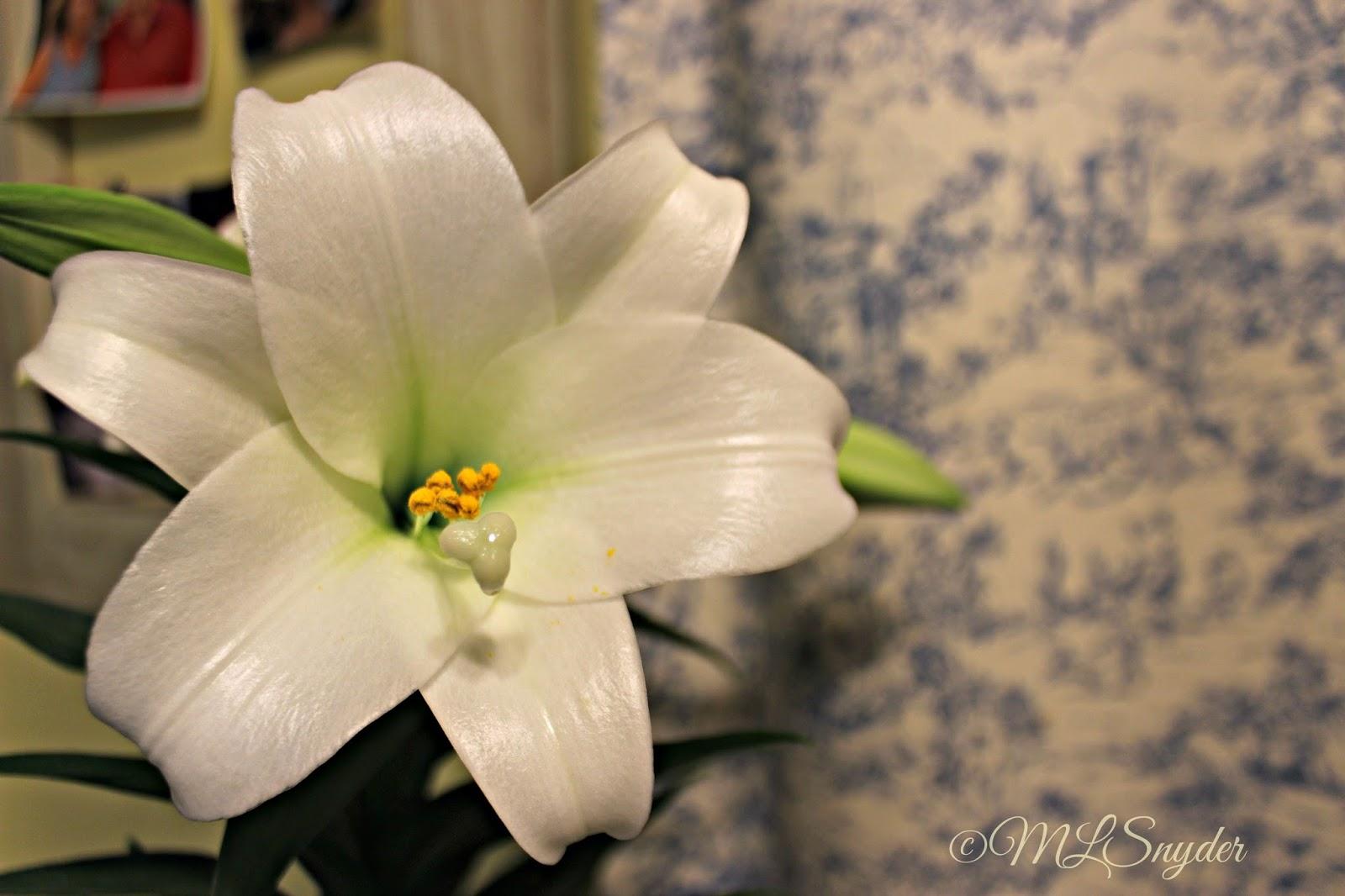 Grandparents Grandchildren Anatomy Of A Lily Flower