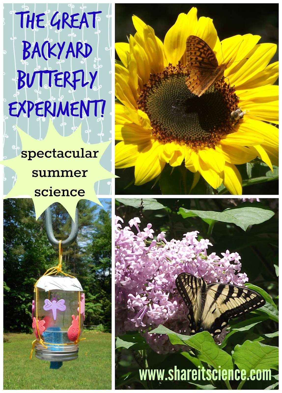 share it science the great backyard butterfly experiment