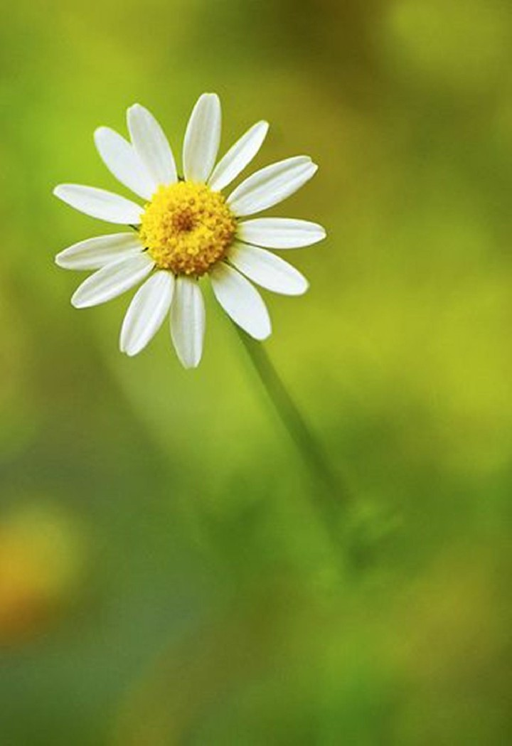 Hinh nen hoa cuc dep%2B%25284%2529