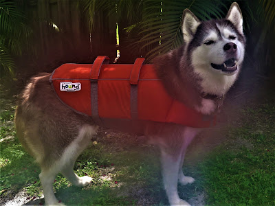 Boat safety for dogs, keep dogs safe on boats, dog safety, boat safety, boating with dogs