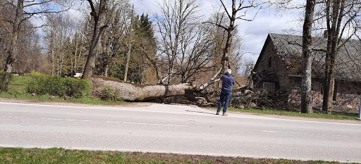Vīrietis bildē vētrā nogāzto koku