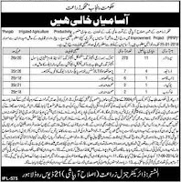 Government of Punjab Agriculture Department Jobs in 13 January 2018