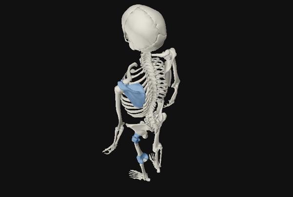 Scientists 3D print human of the future
