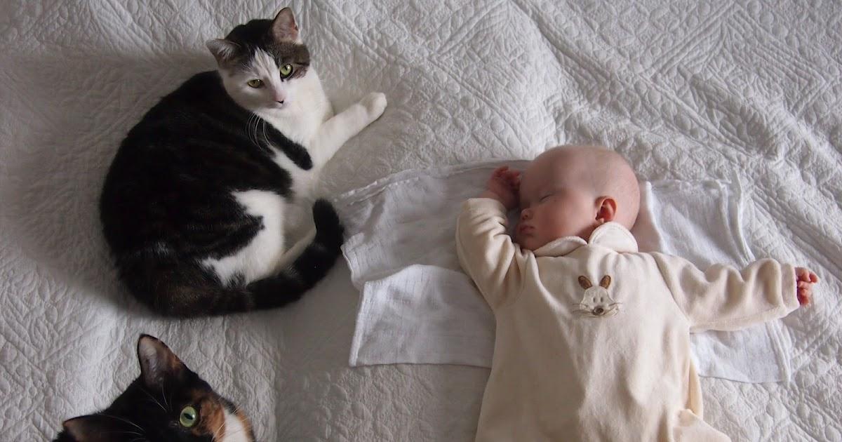 Kissa Ja Vauva