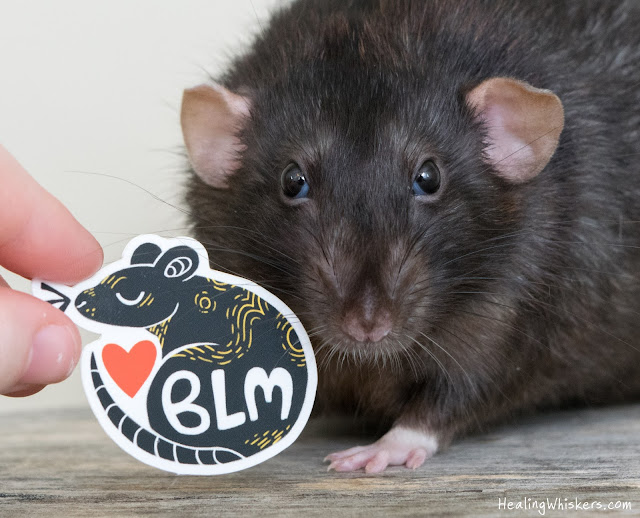 Franklin the therapy rat with our BLM stickers