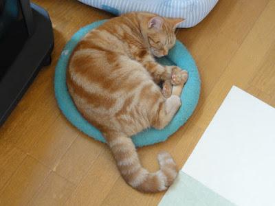 丸くなって寝ています。