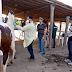 Técnicos da Sesa e da Adagri investigam caso de Febre do Nilo Ocidental em equinos em Boa Viagem
