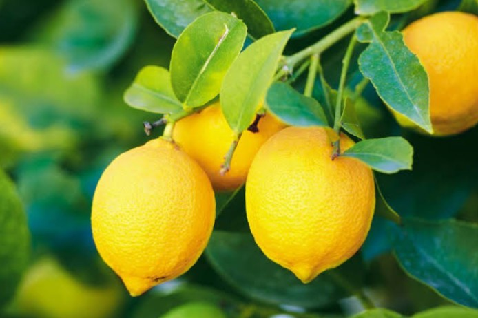 nutrition fact and health benefits of lemon