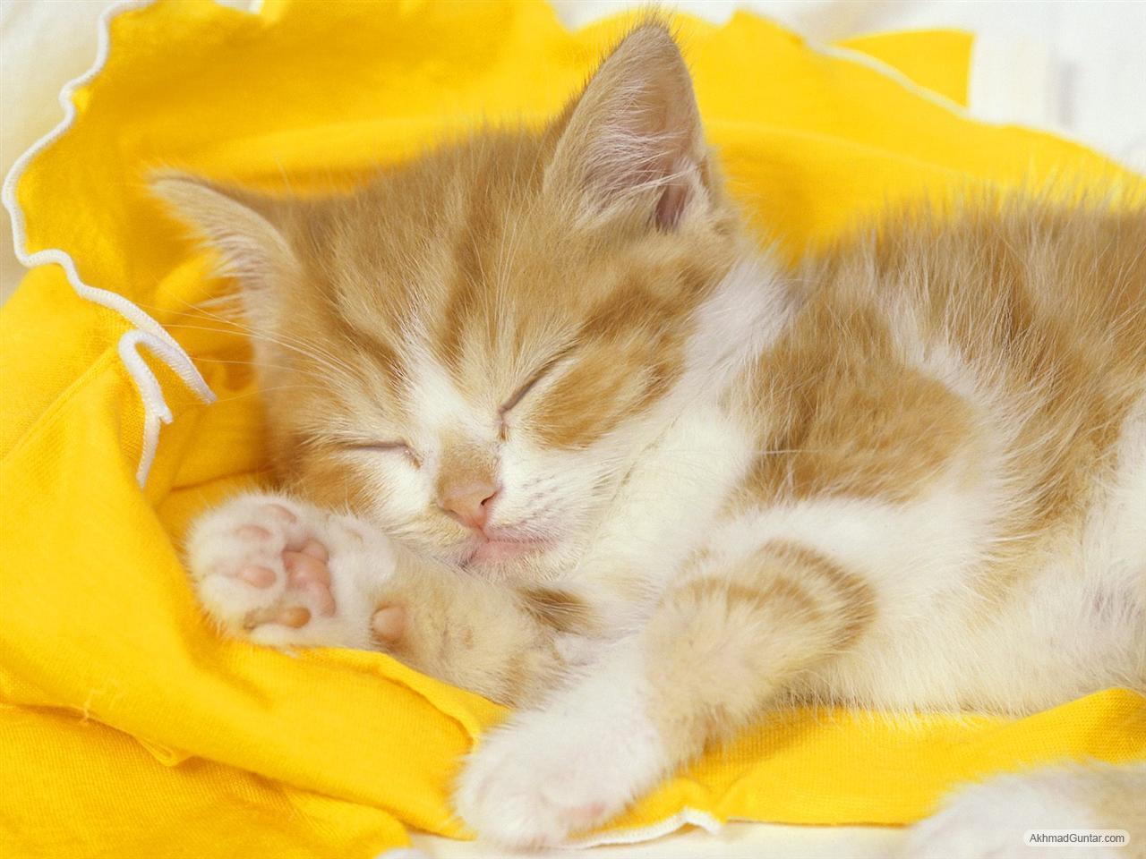 Perawatan Kucing Kucing Imut Lagi Tidur