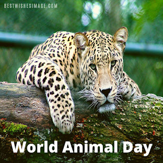 Best animal day images 2021