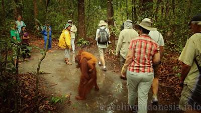 Indonesian's Wildlife