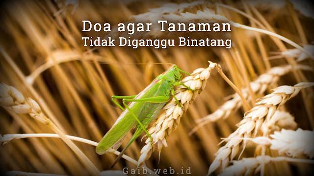 Doa agar Tidak Gagal Panen