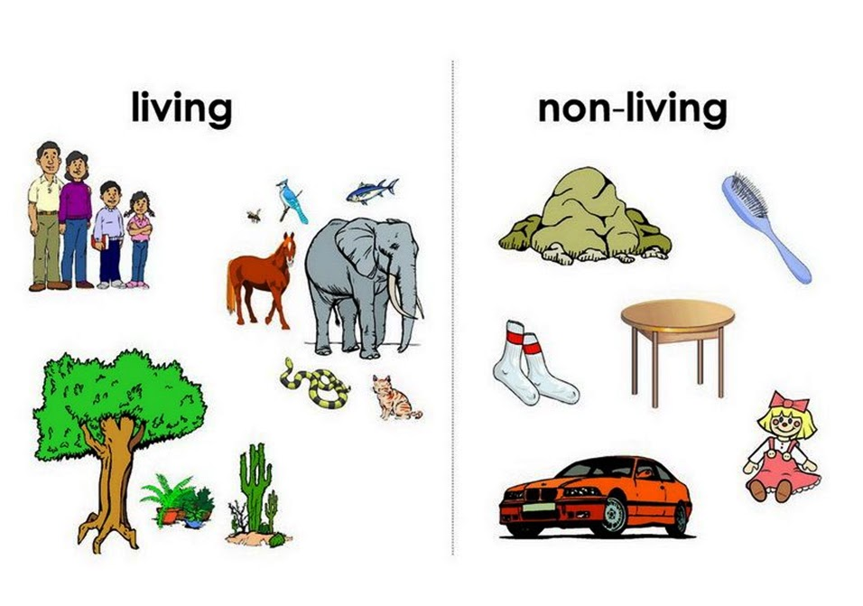 Sonu academy web of life text for Animals that live in soil for kids