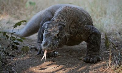 Best Komodo Tours and Travel