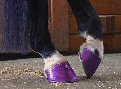Twinkle Glitter for horses
