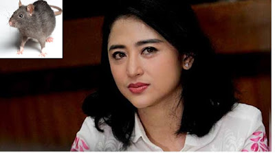 HAMPIR SAJA, Dewi Perssik Unggah Video Nyaris Makan Tikus