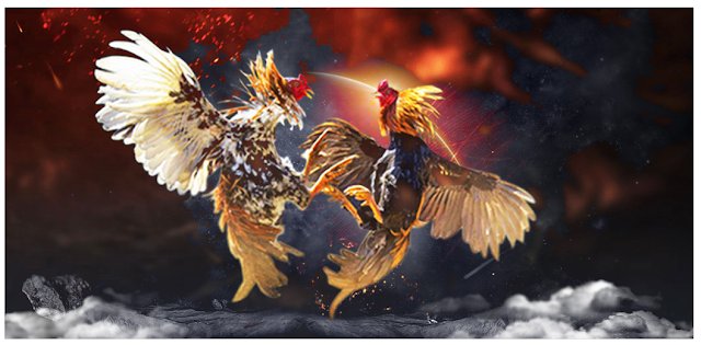 Judi Sabung Ayam Digerebek, 100 Orang Kabur ke Hutan Lede