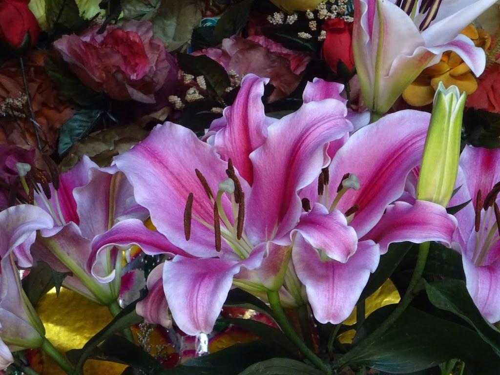 Açucena - A flor da altivez e elegância | Açucena, Flores